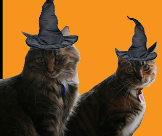Witchkitties