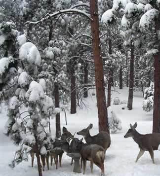 Deer_3-18-2003