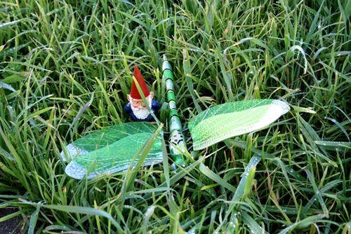 Gnomewithdragonfly