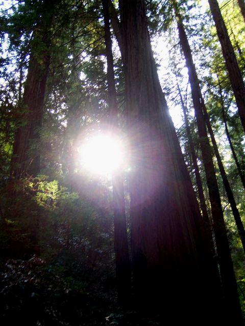 Sunlightthrutreesrs