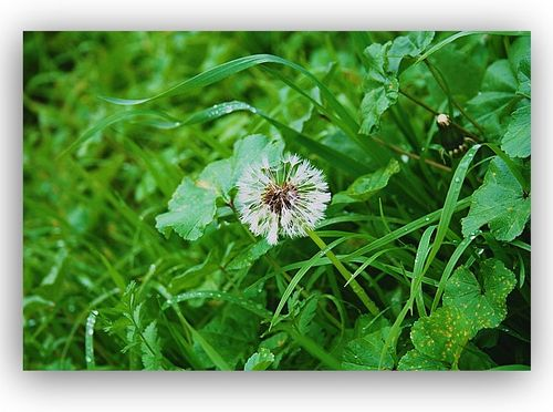 WBwishflower