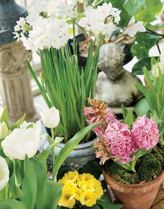 Detail-pottd-flowers-HTOURS0105-de