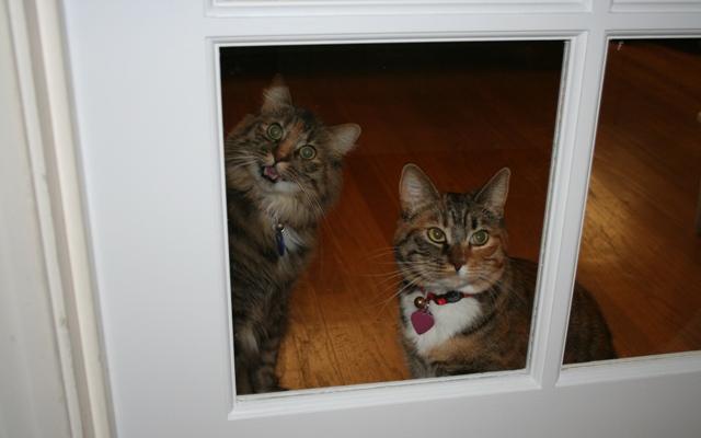 Catsinwindow