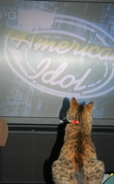 LucywatchingTV