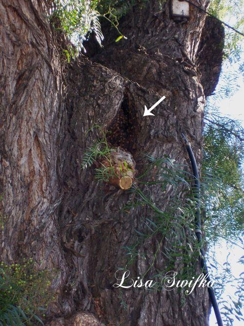 Beesinpeppertree copy