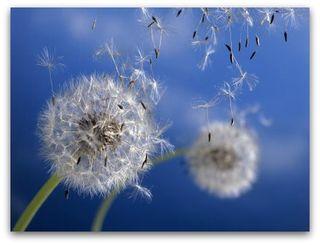 Wishflower