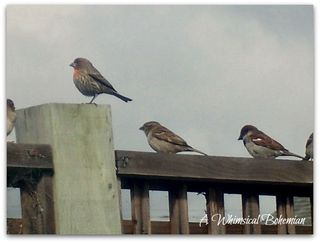 Birdsinline