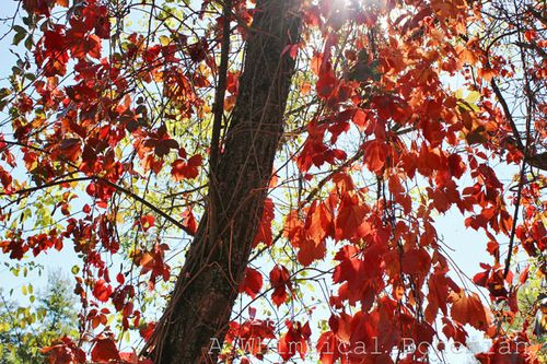 Fallcolors3wm