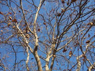 Hosptree